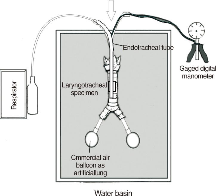 Experimental Setup Of The Artificial Ventilation System The